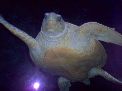 sea turtle essay