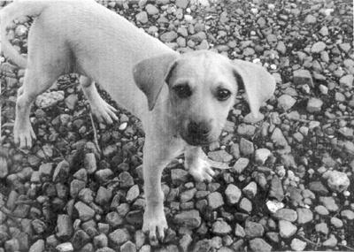 essay about puppy