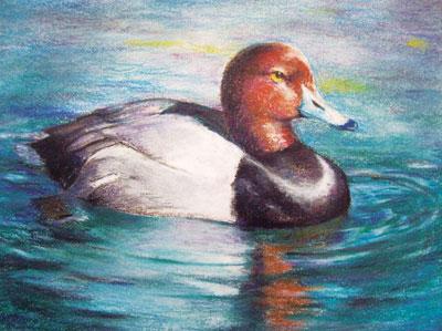 Duck Hunting Essay