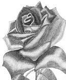 Critical analyis of a rose for